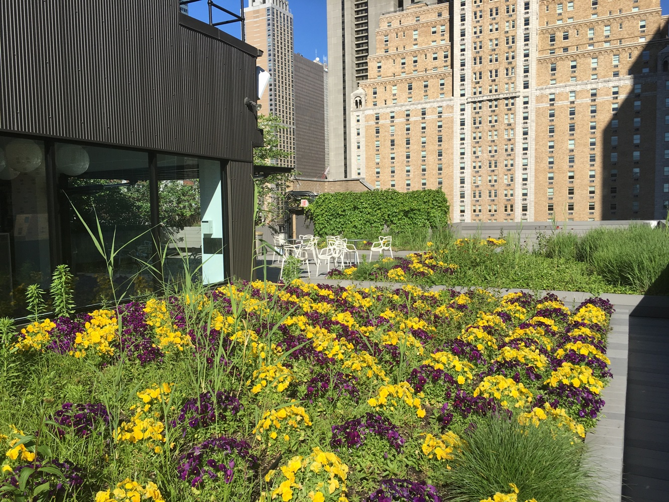 a lively garden growing on top of an office building